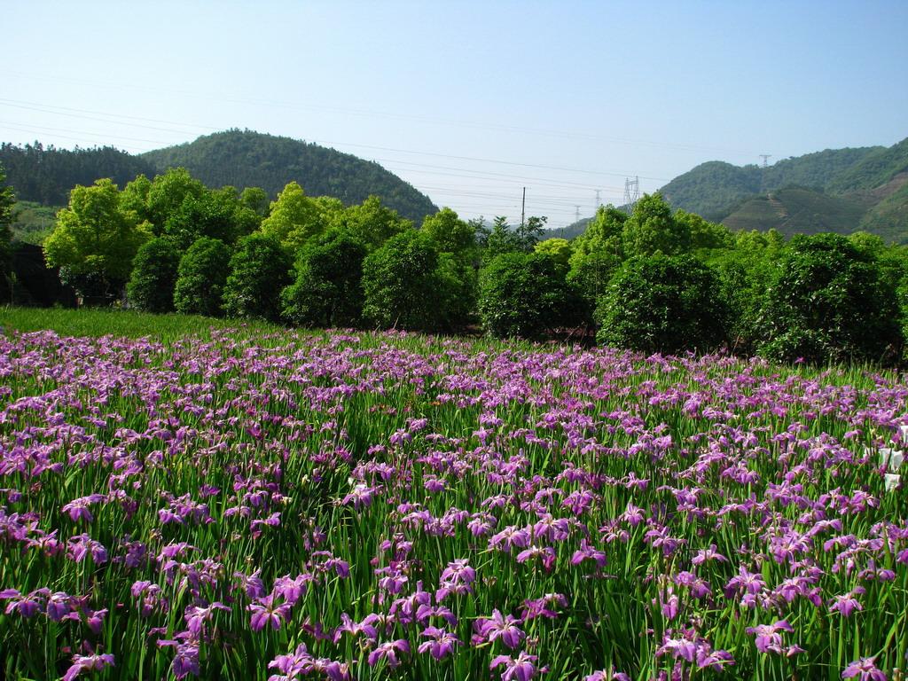 地被、湿地植物及观赏草研究