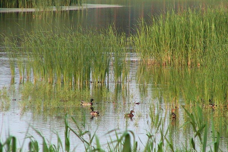 《江西赣南湿地植物资源及其开发利用的研究》