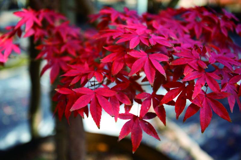 《花木生态园的景观与文化》